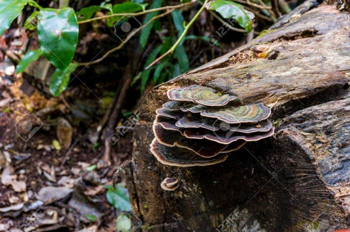 Fungus, fungi on a tree trunk in rainforest. Toadstool on tree trunk. Mushrooms in tropical rain forest. Concept of symbiotic relationships in nature. Macro shot, shallow dof, selective focus